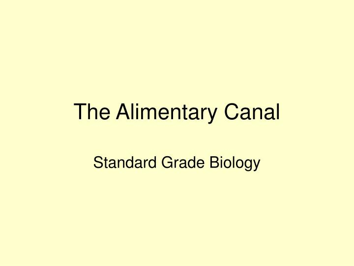 The alimentary canal l.jpg