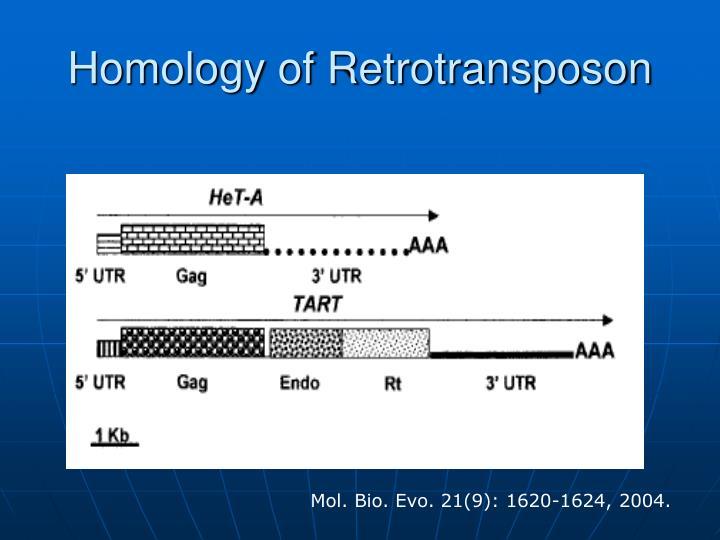 Homology of Retrotransposon