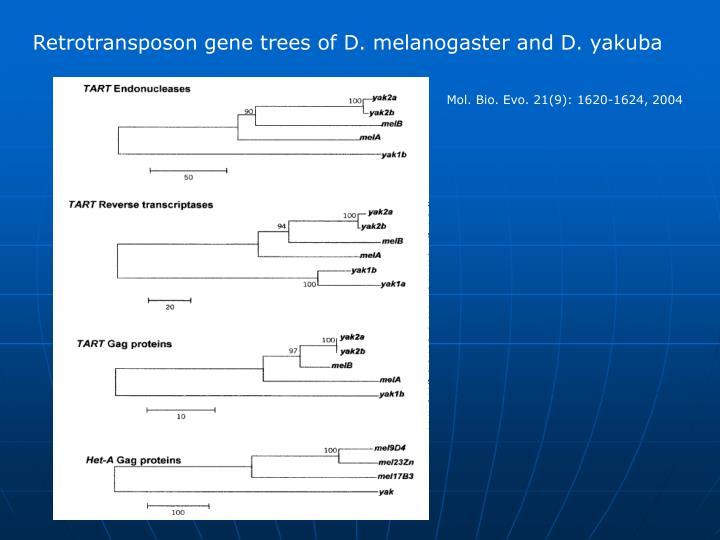 Retrotransposon gene trees of D. melanogaster and D. yakuba