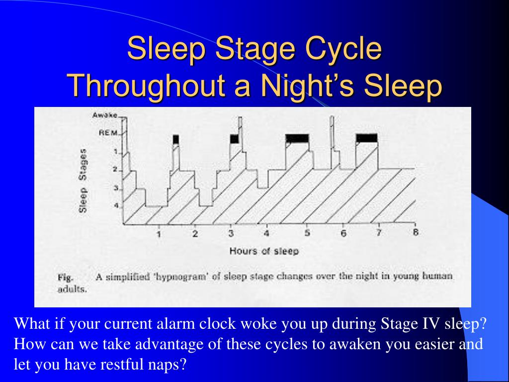 Sleep Stage Cycle Throughout a Night's Sleep