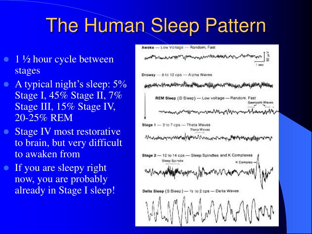 The Human Sleep Pattern