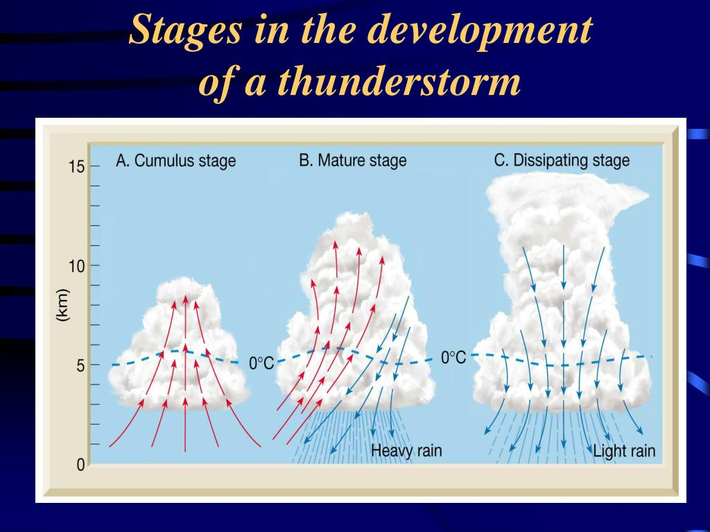 Stages in the development