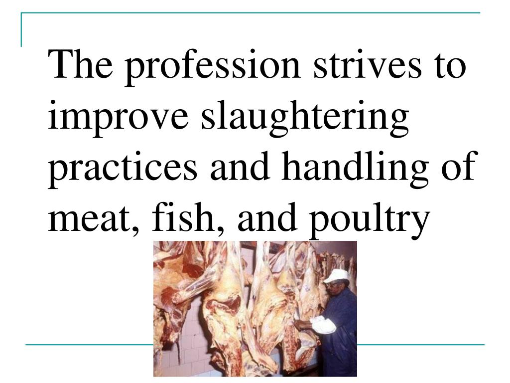 The profession strives to improve slaughtering practices and handling of meat, fish, and poultry