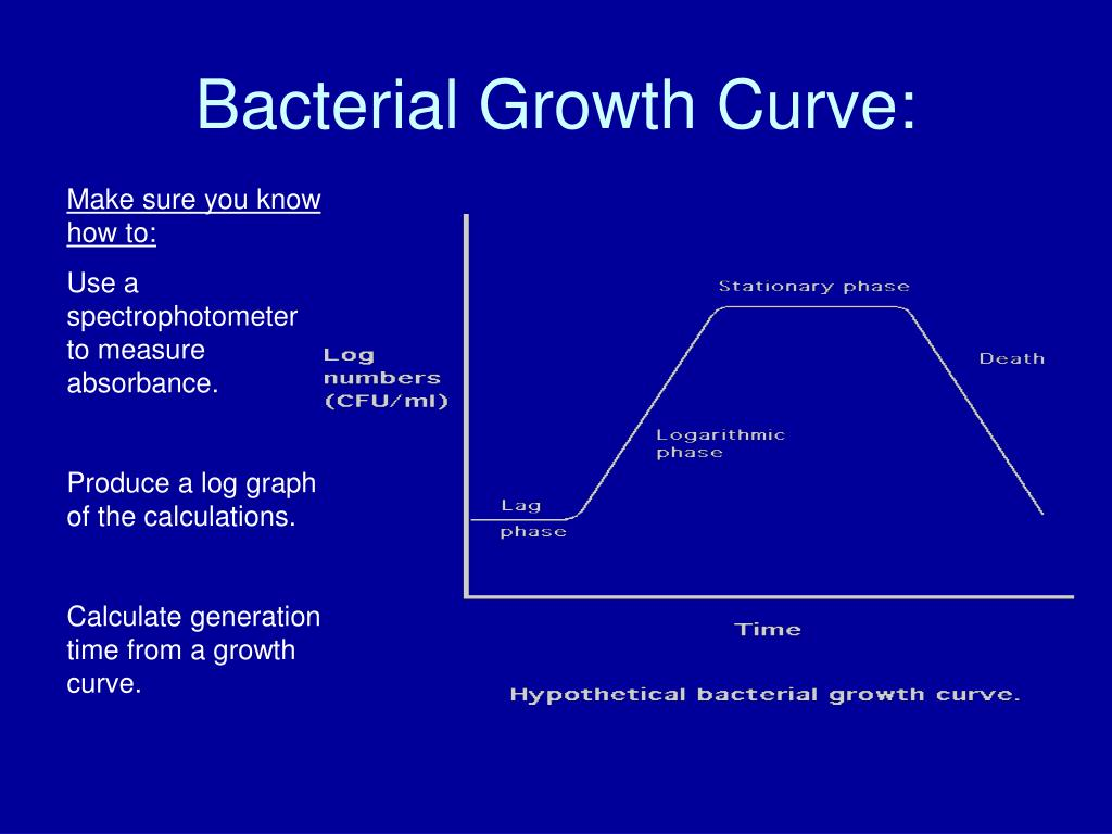 Bacterial Growth Curve: