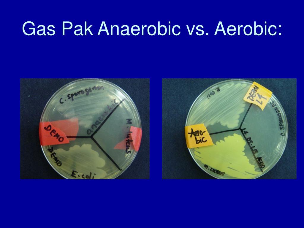 Gas Pak Anaerobic vs. Aerobic: