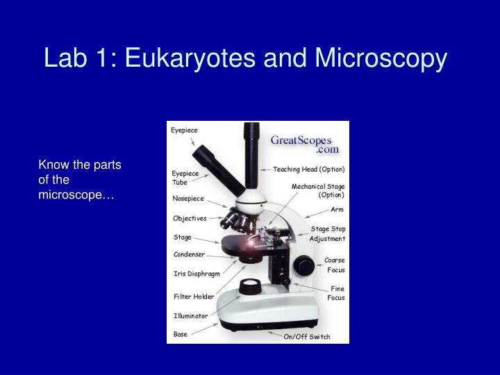 Lab 1 eukaryotes and microscopy