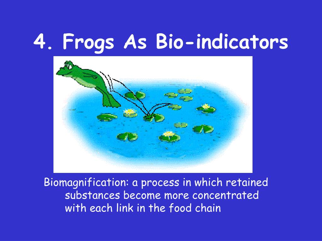 4. Frogs As Bio-indicators
