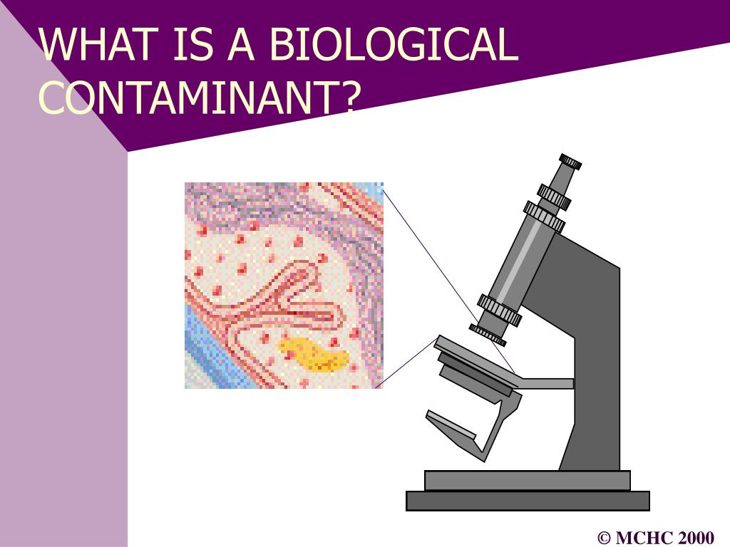 WHAT IS A BIOLOGICAL CONTAMINANT?