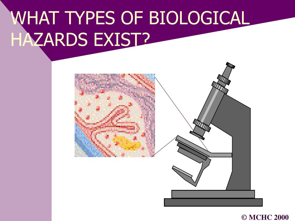 WHAT TYPES OF BIOLOGICAL HAZARDS EXIST?