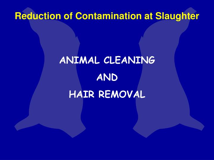 Reduction of Contamination at Slaughter
