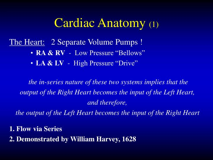 Cardiac anatomy 1 l.jpg