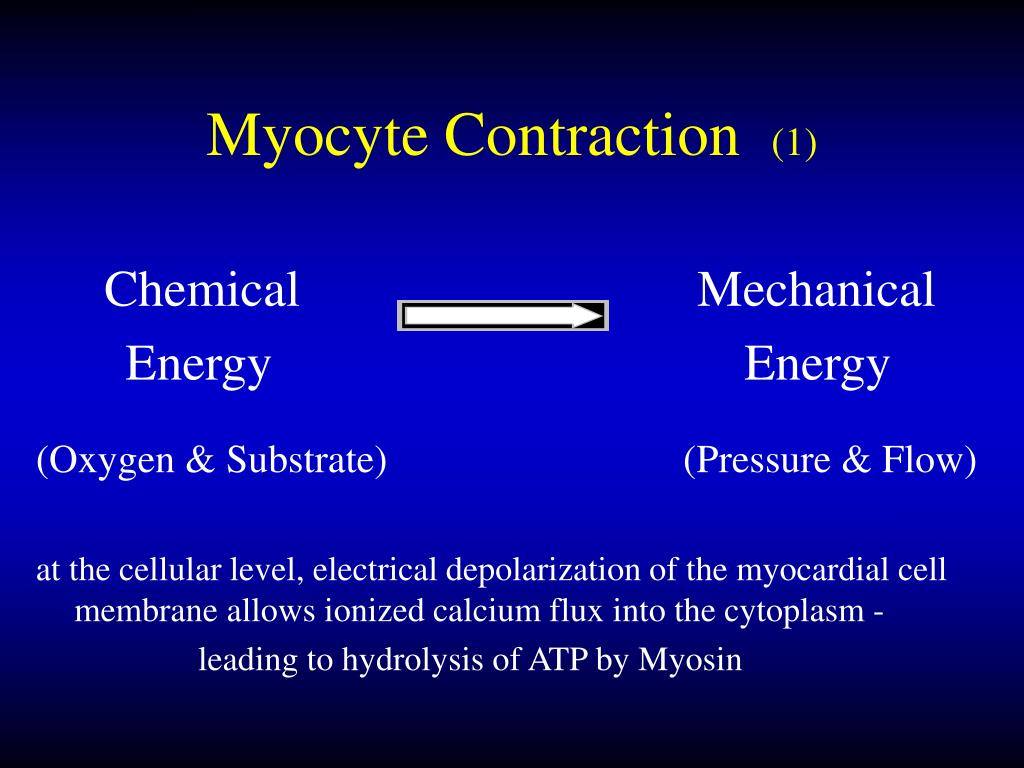 Myocyte Contraction
