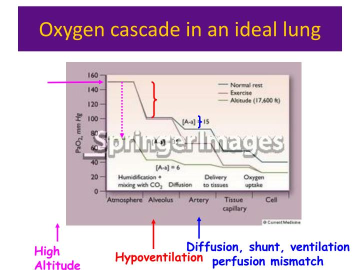 Oxygen cascade in an ideal lung