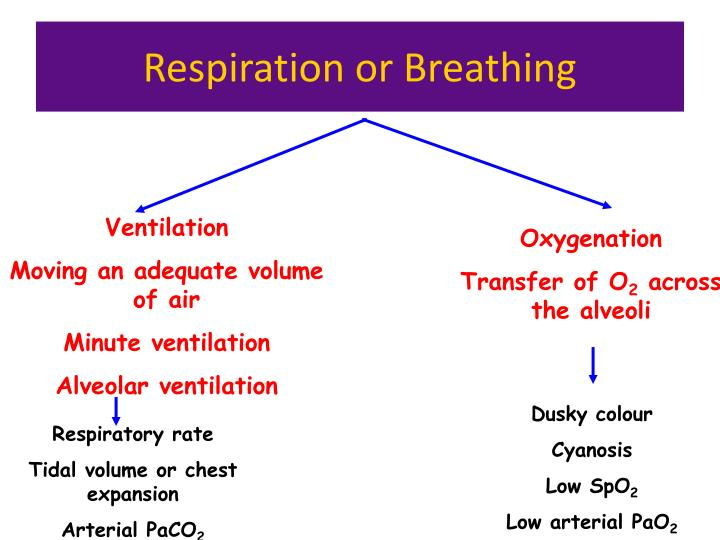Respiration or breathing