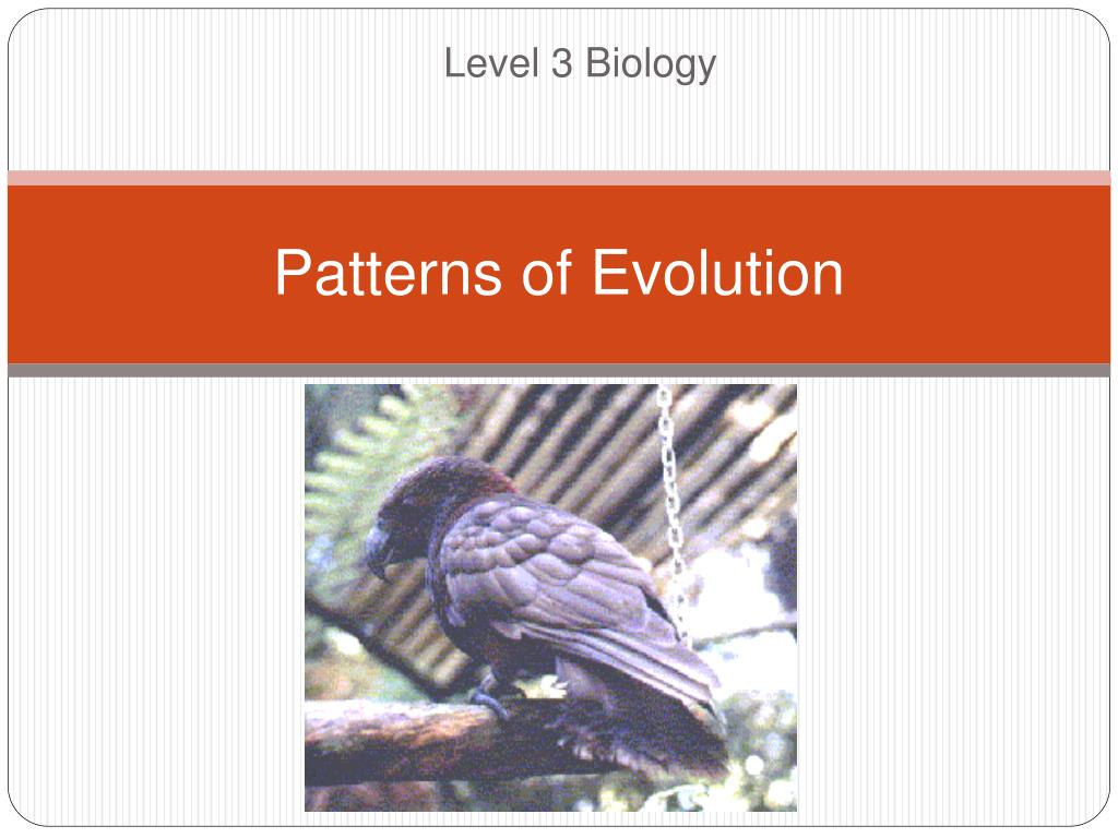 Patterns And Mechanisms Of Evolution Explain How Natural Selection