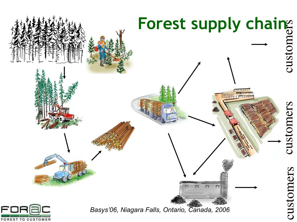 Forest supply chain