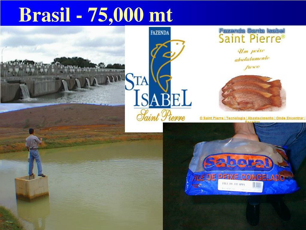 Brasil - 75,000 mt