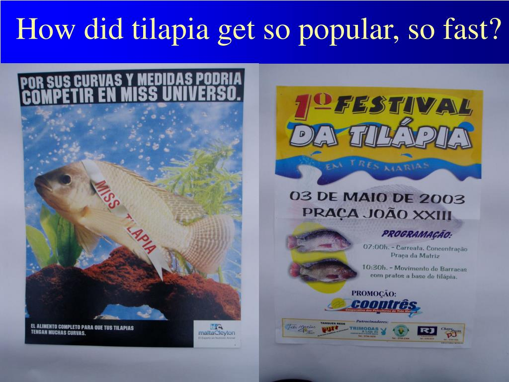 How did tilapia get so popular, so fast?