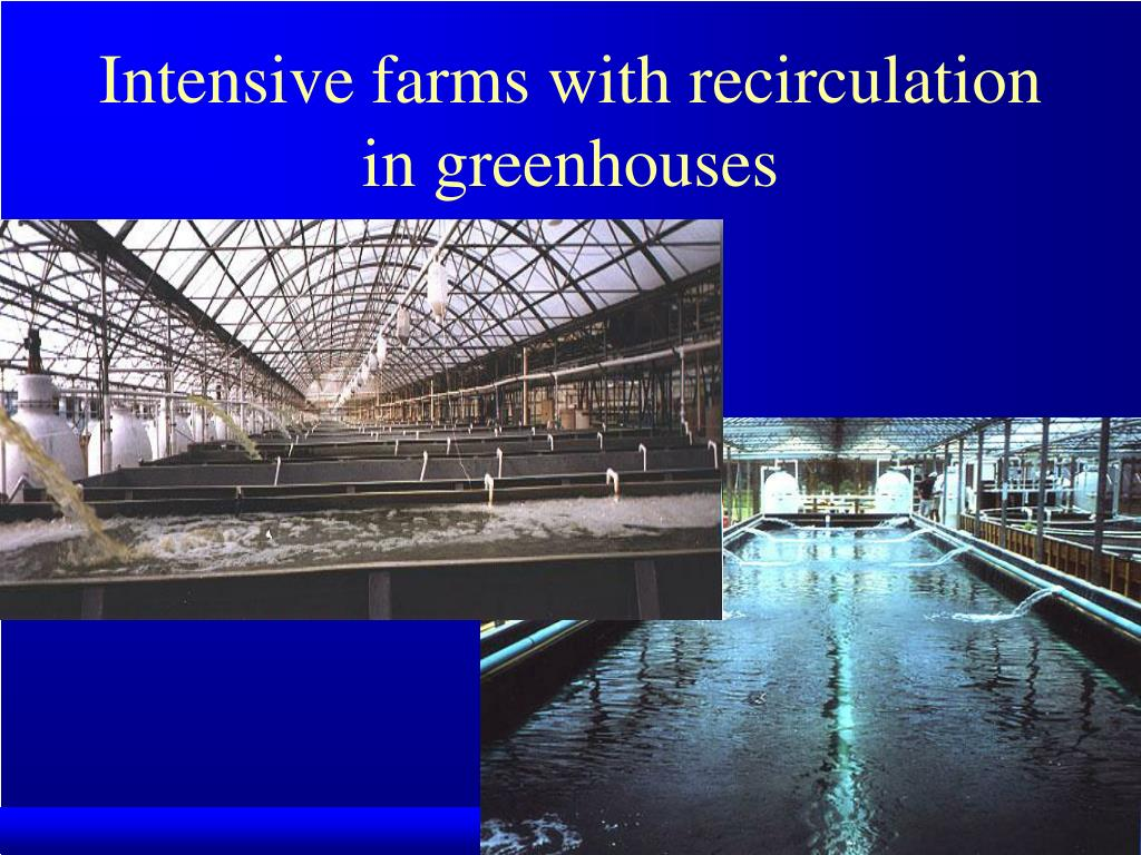 Intensive farms with recirculation in greenhouses