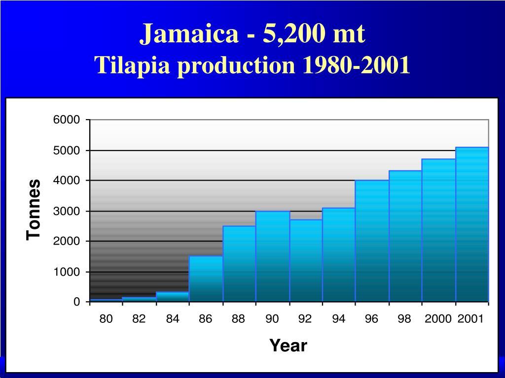 Jamaica - 5,200 mt