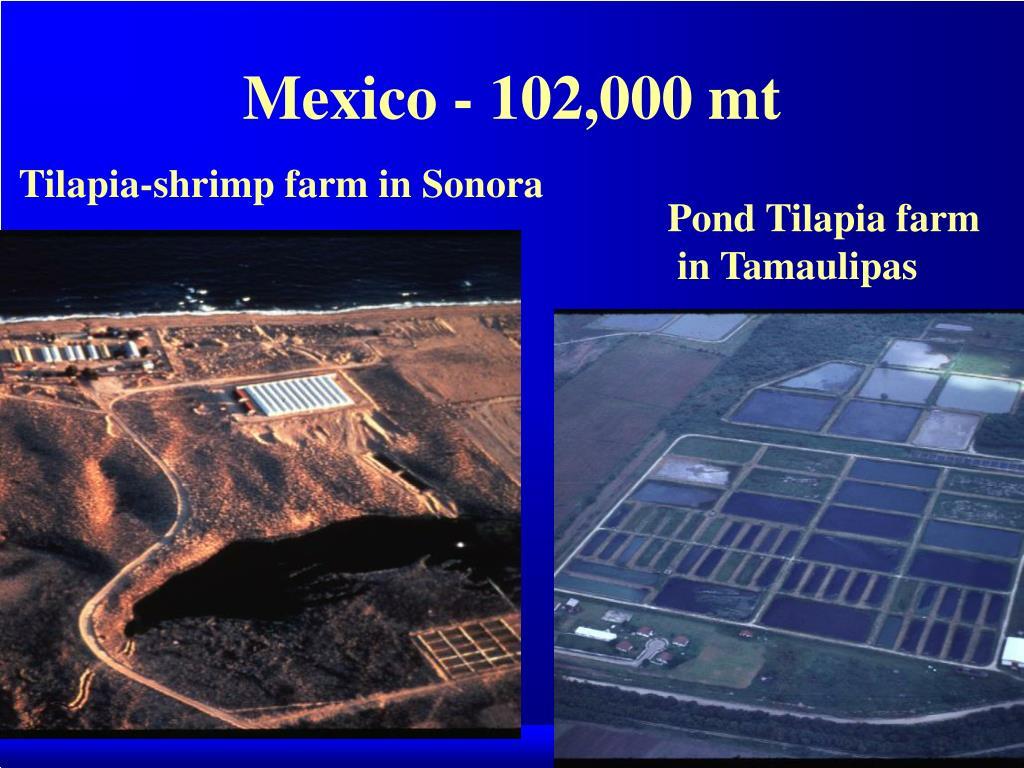 Mexico - 102,000 mt