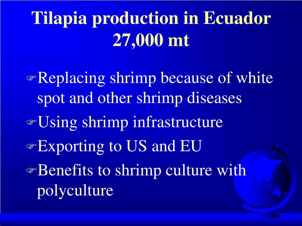 Tilapia production in Ecuador 27,000 mt