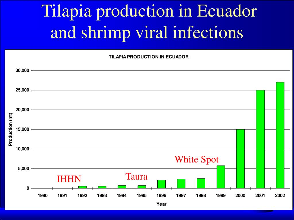 Tilapia production in Ecuador and shrimp viral infections