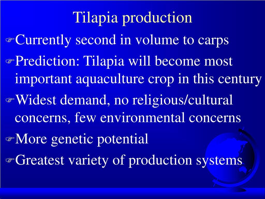 Tilapia production