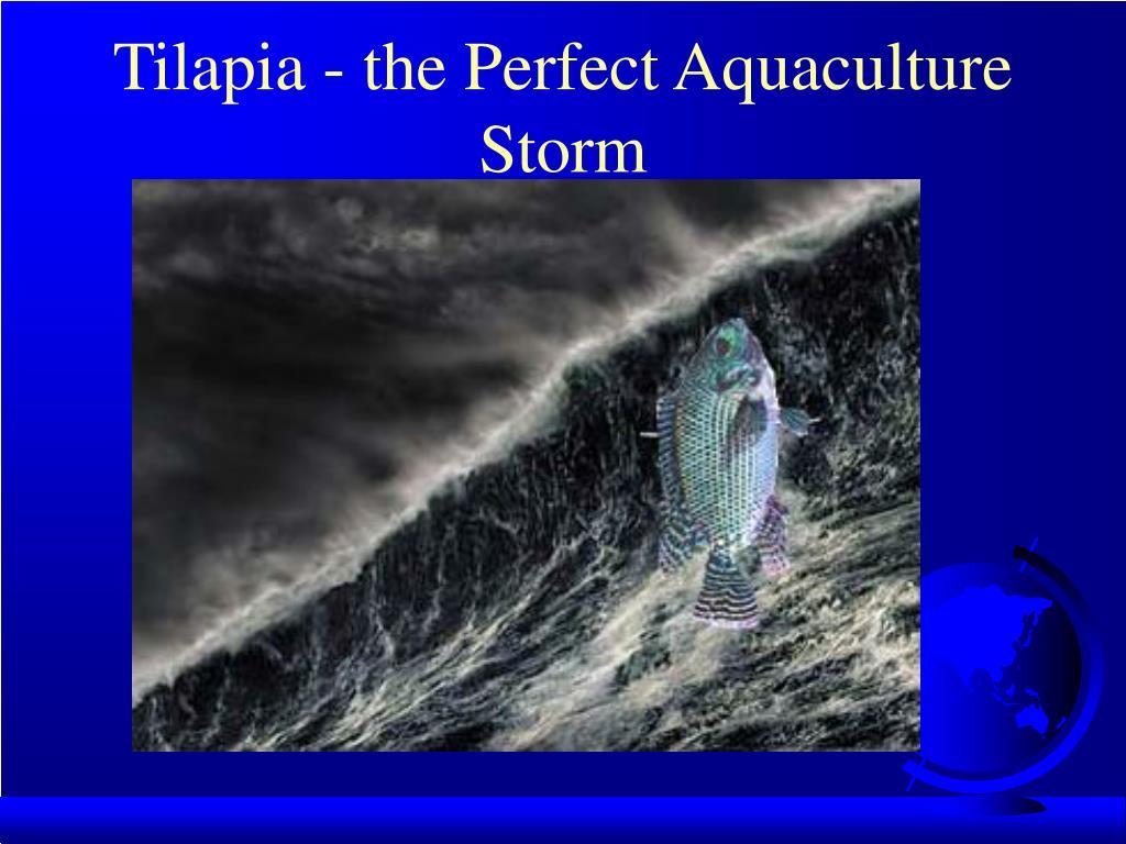 Tilapia - the Perfect Aquaculture Storm
