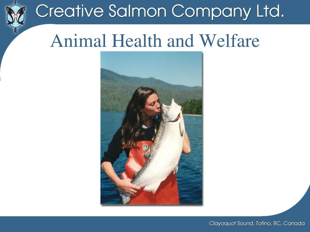 Animal Health and Welfare