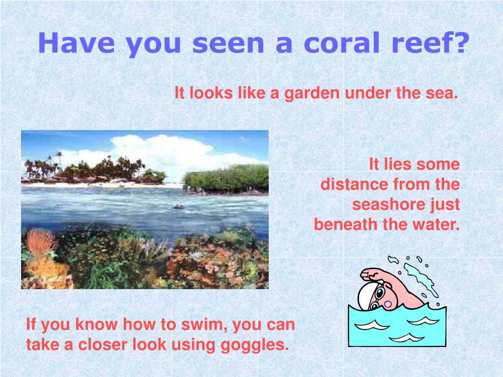 Have you seen a coral reef?