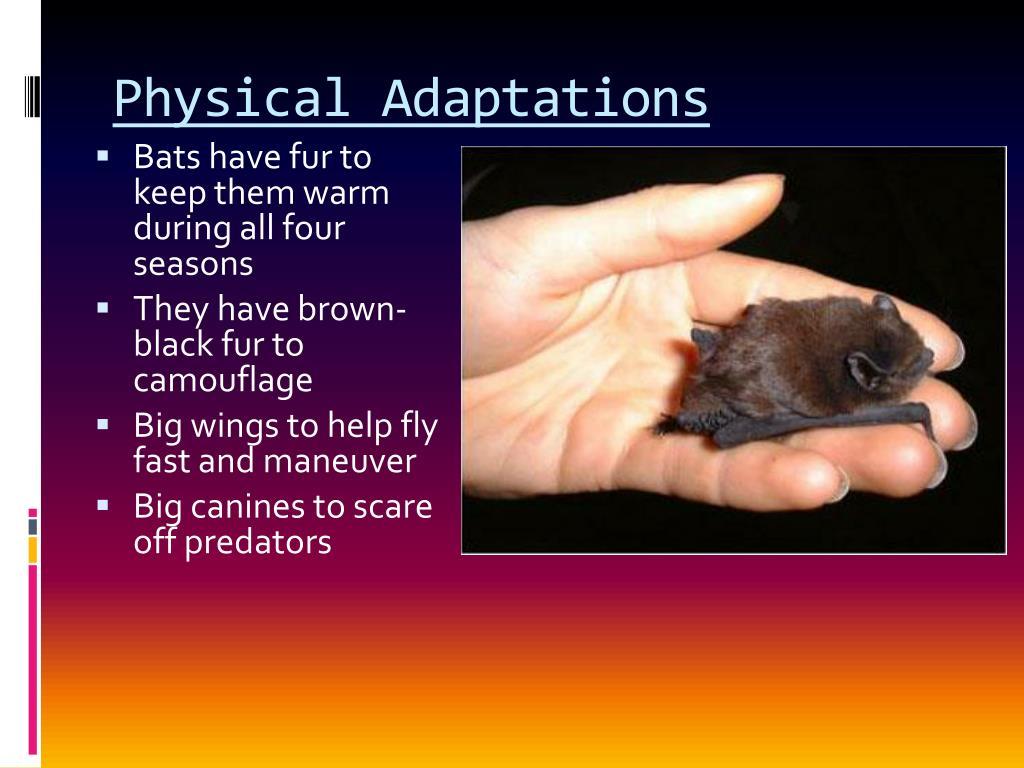 Physical Adaptations