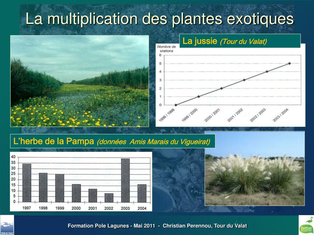 La multiplication des plantes exotiques