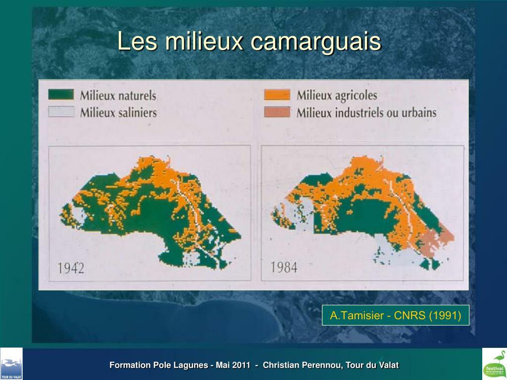 Les milieux camarguais