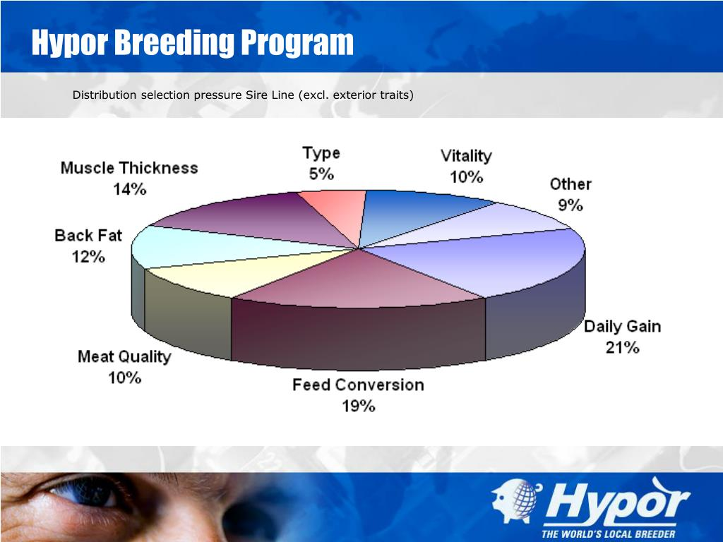 Hypor Breeding Program