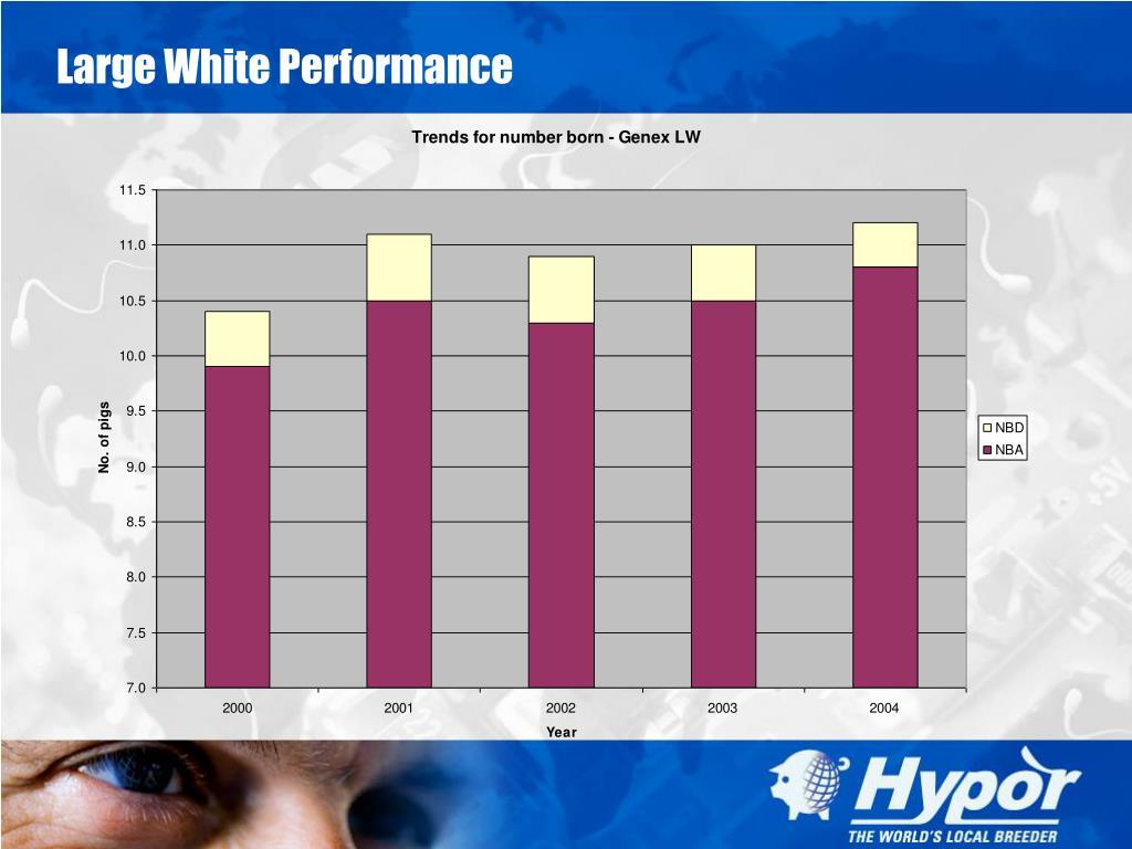 Large White Performance