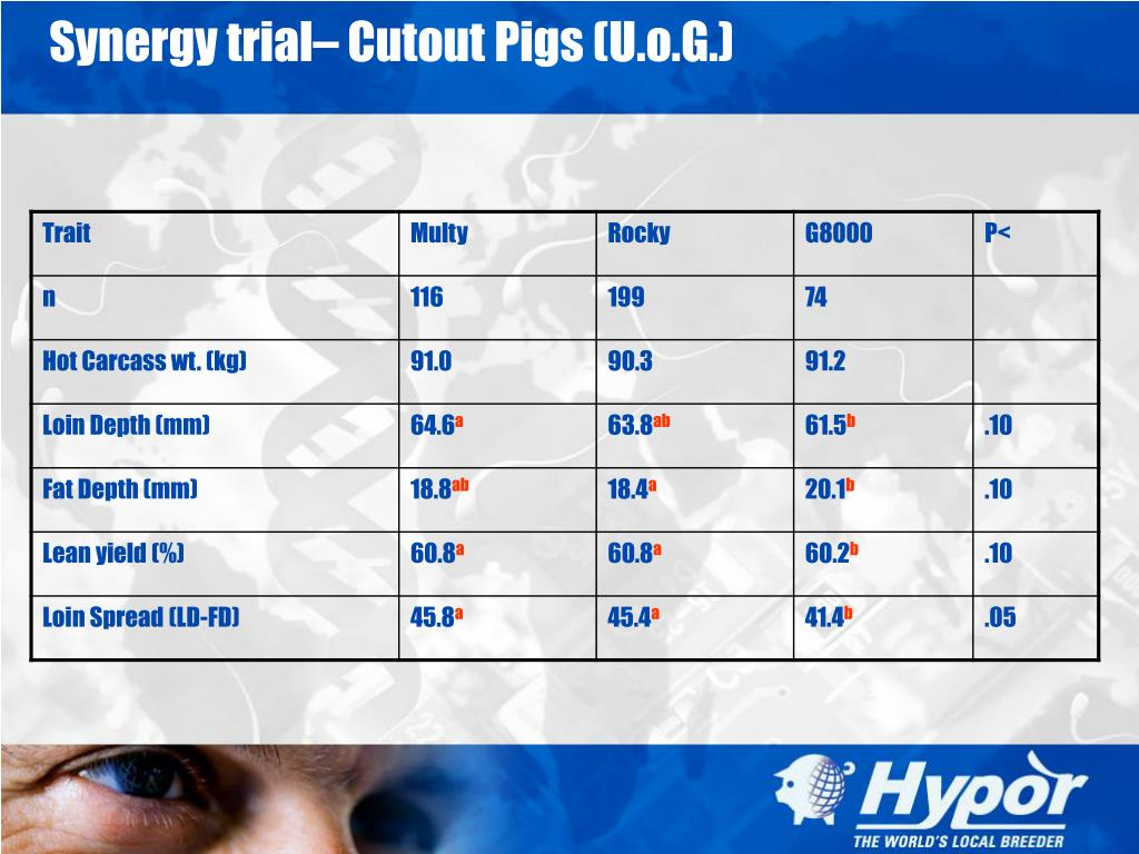 Synergy trial– Cutout Pigs (U.o.G.)