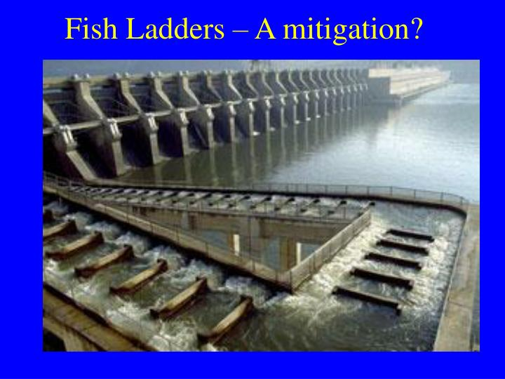 Fish Ladders – A mitigation?