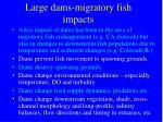 large dams migratory fish impacts