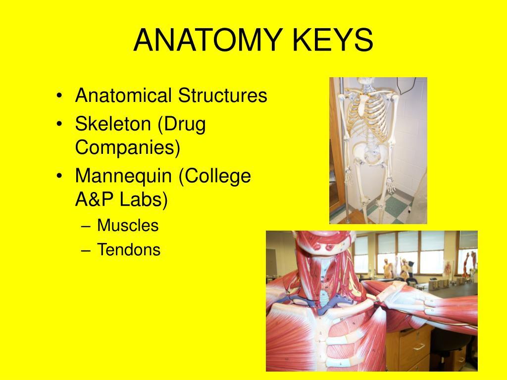 ANATOMY KEYS