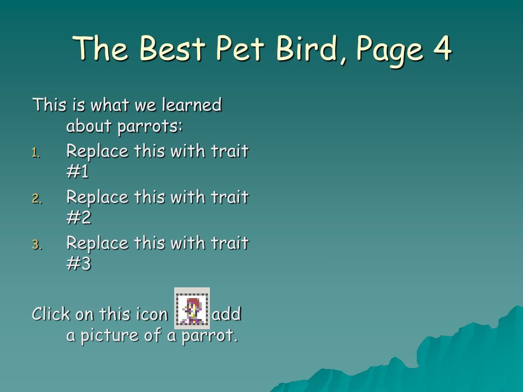 The Best Pet Bird, Page 4