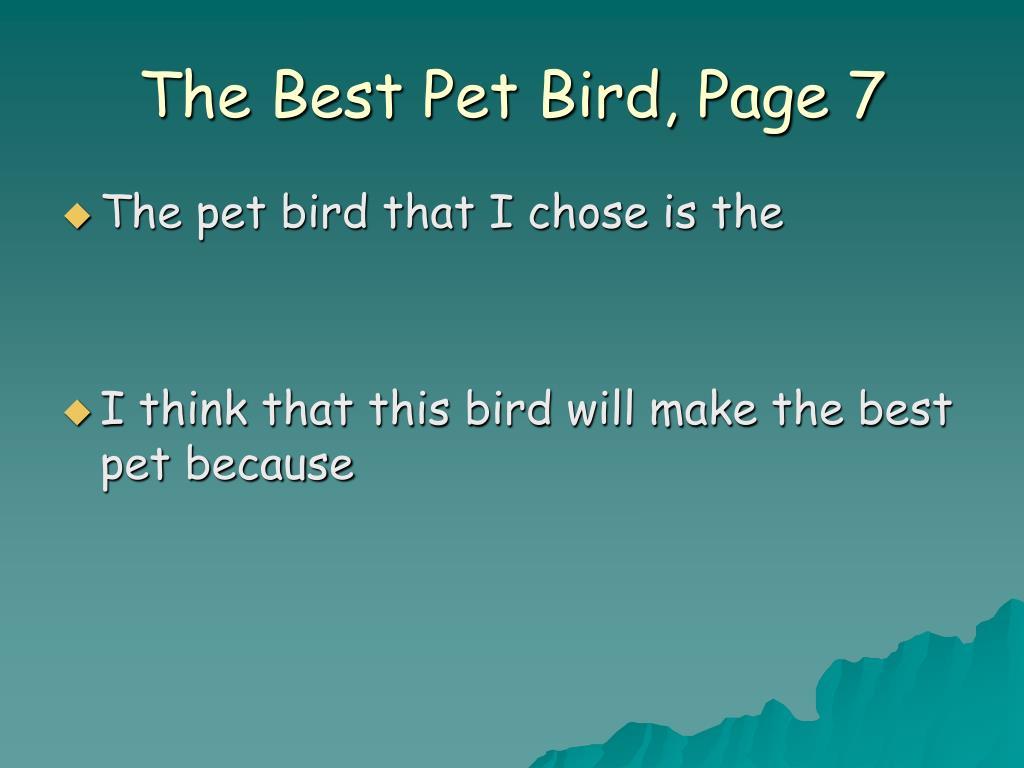 The Best Pet Bird, Page 7