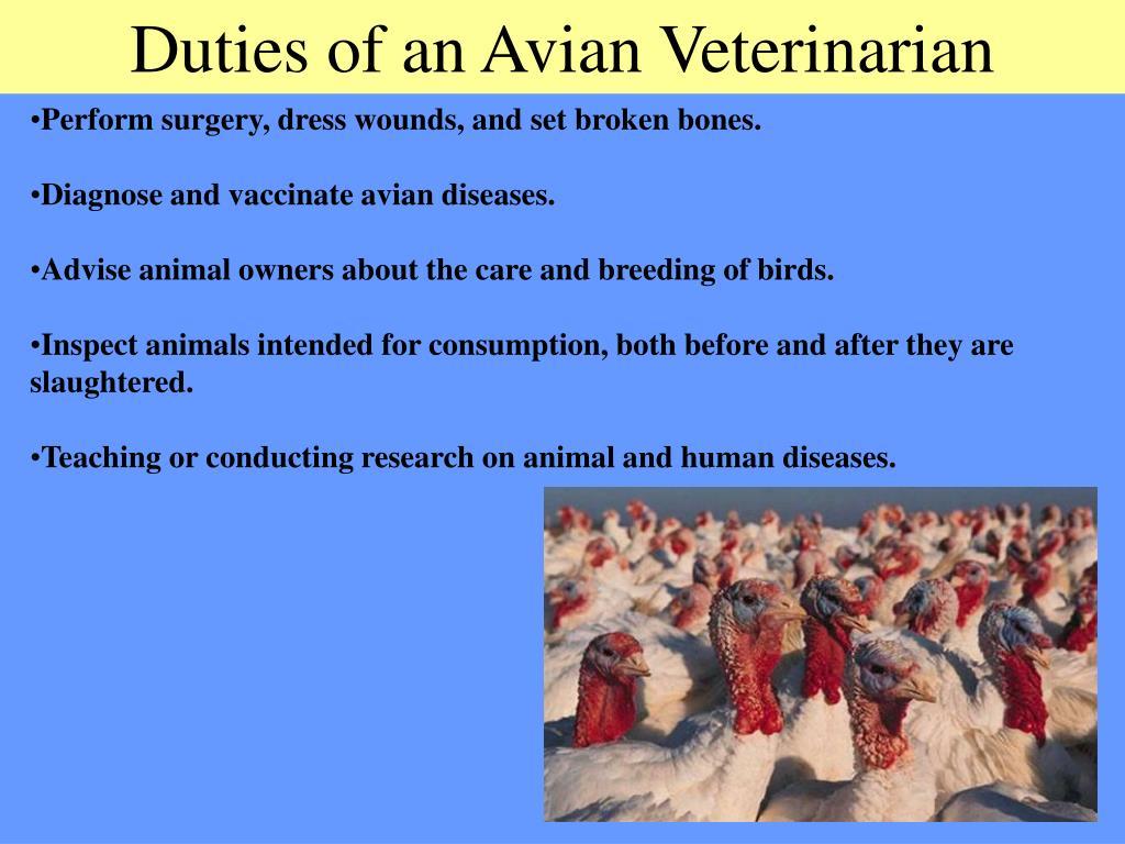 Duties of an Avian Veterinarian