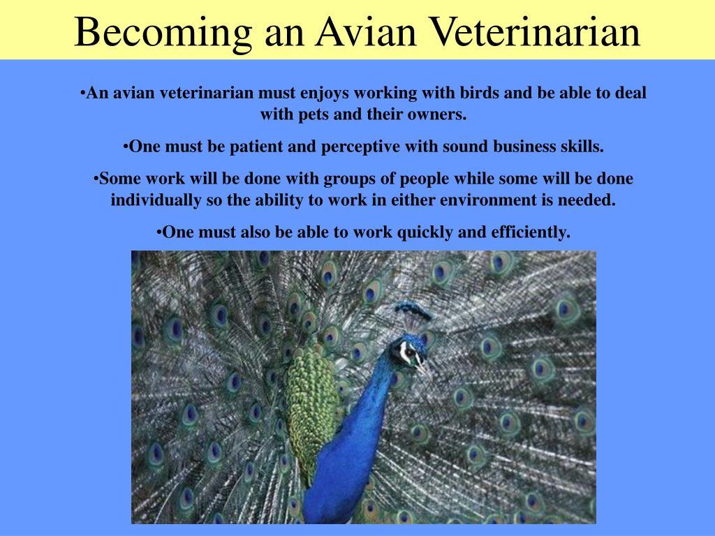 Becoming an Avian Veterinarian