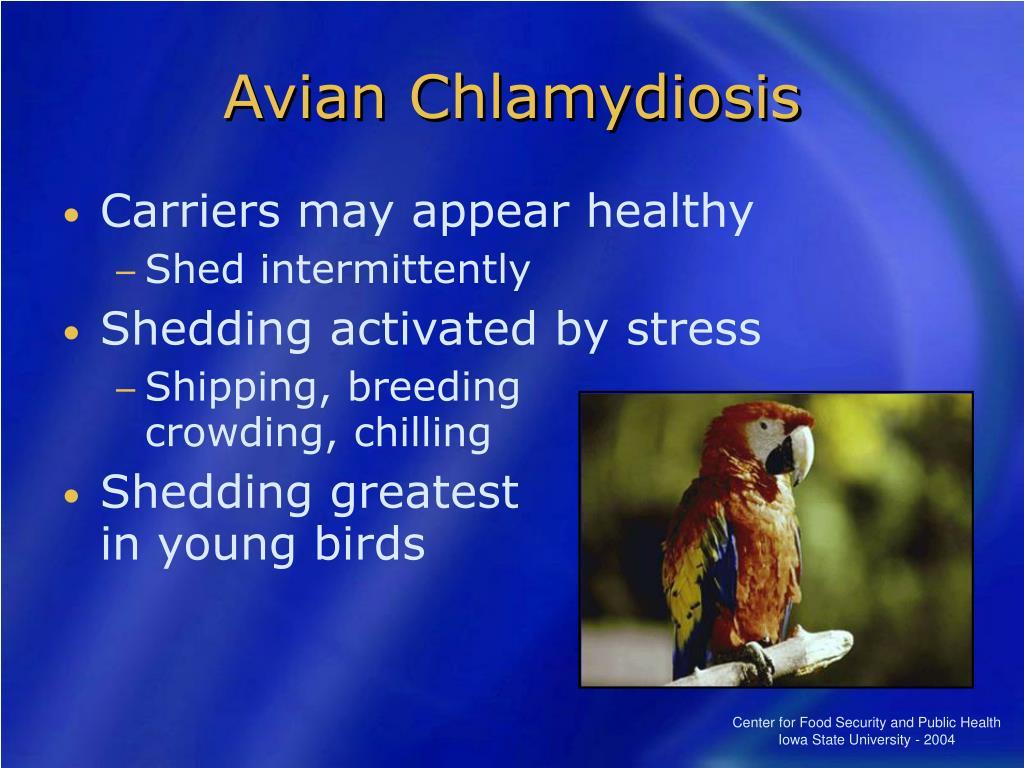 Avian Chlamydiosis