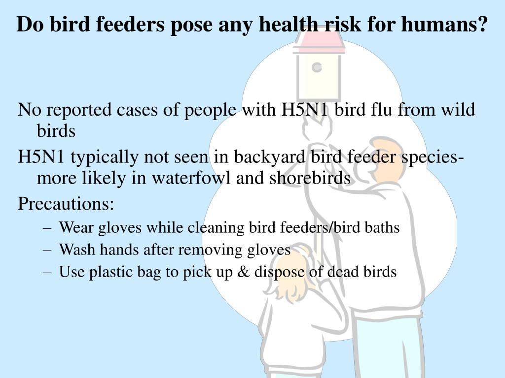 Do bird feeders pose any health risk for humans?