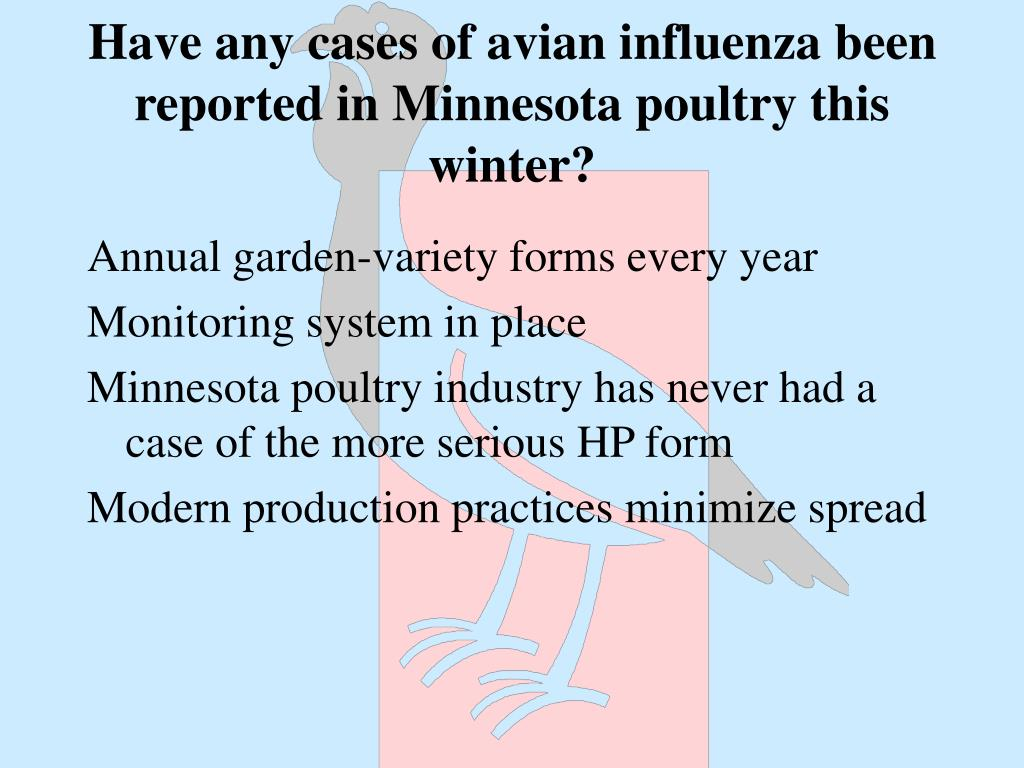 Have any cases of avian influenza been reported in Minnesota poultry this winter?