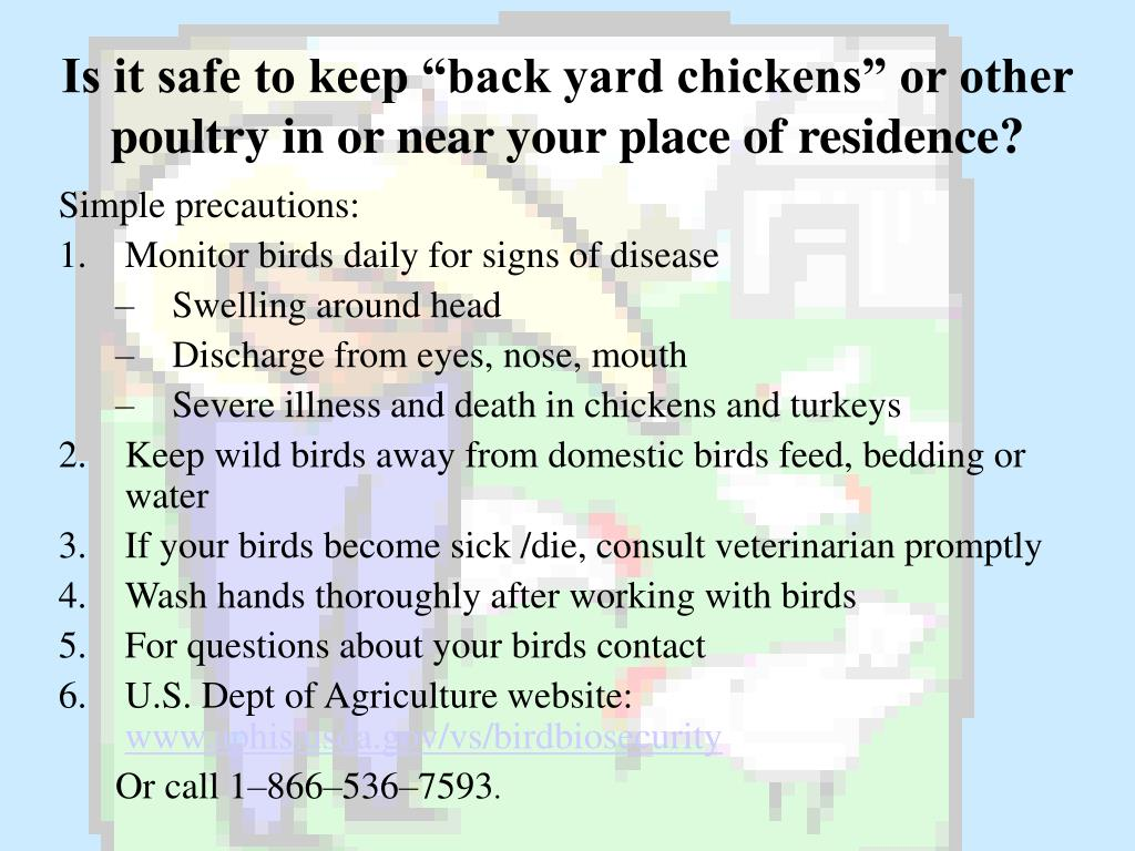"Is it safe to keep ""back yard chickens"" or other poultry in or near your place of residence?"