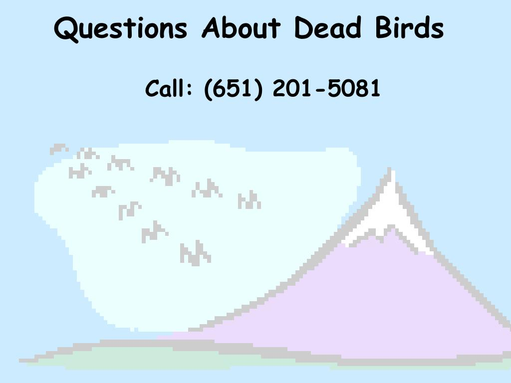 Questions About Dead Birds