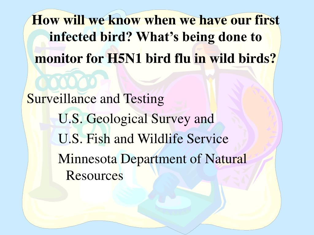 How will we know when we have our first infected bird? What's being done to monitor for H5N1 bird flu in wild birds?